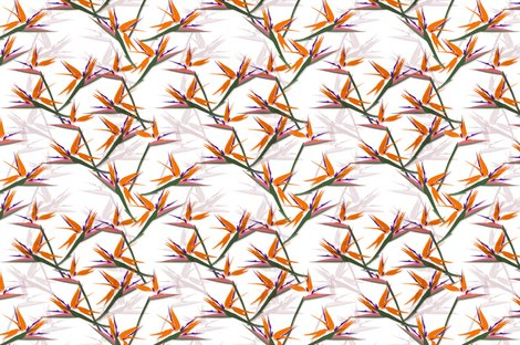 Rrrstrelitzia_by_youdesignme_shop_preview
