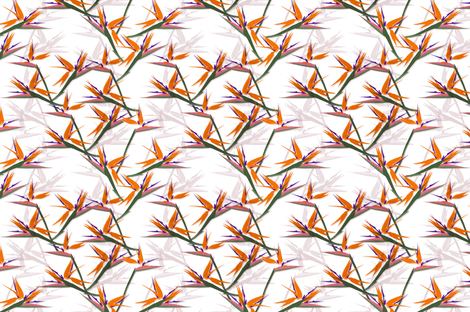 Strelitzia_by_youdesignme fabric by youdesignme on Spoonflower - custom fabric