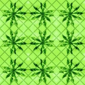 lupine lattice