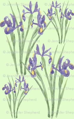 Irises on Green (version 2)