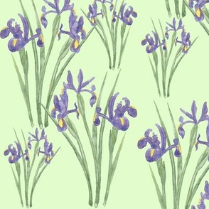 Irises on Green (version 2)