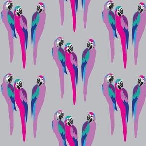 Disco parrots