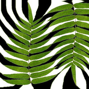 zebra_leaves_black_and_white