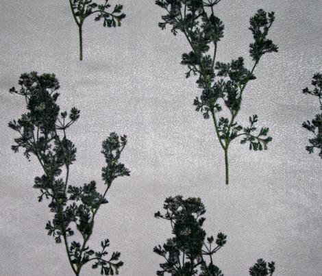 Sprigs of Cilantro (original)