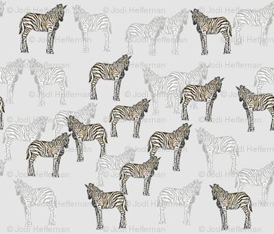 zebra_final2