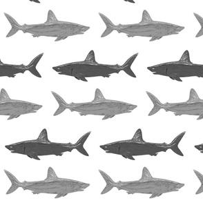 gray_sharks