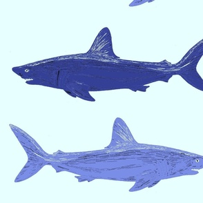 blue sharks large