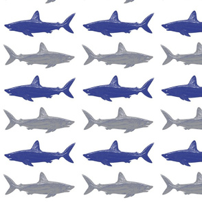 blue and gray sharks