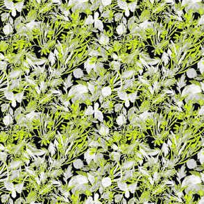 Lime Folag