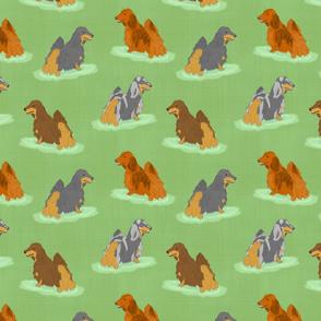 Standing Longhaired Dachshunds - green linen