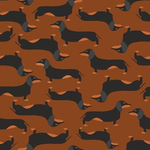 Dachshound on brown background