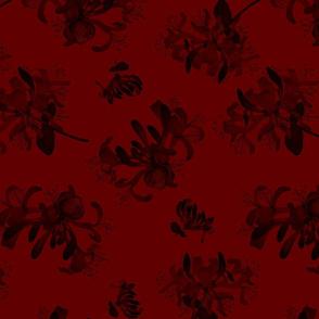 Honeysuckle - Red