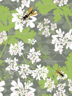 Coriander and Wasps