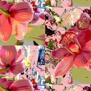orchid1a
