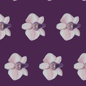 Rrlilac_orchid_side_shop_thumb