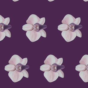 Lilac orchid side