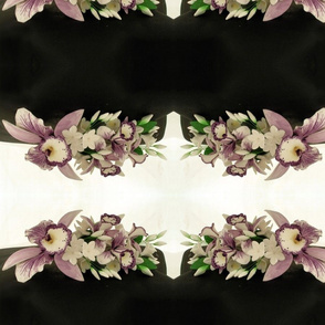 sugar orchids 1