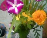 Rtent_flowers_thumb