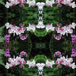 orchids dance