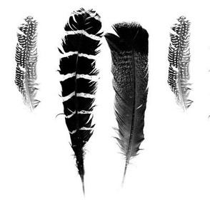 B and W Feathers