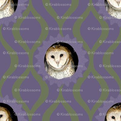Barn Owlet