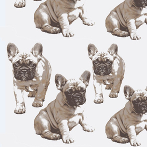 Kerstin French bulldog puppy