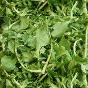 Rtossed_salad_shop_thumb