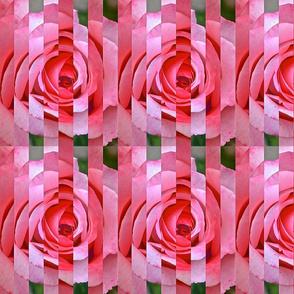 Rose Sliced