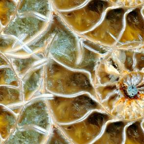 Golden Mean Nautilus