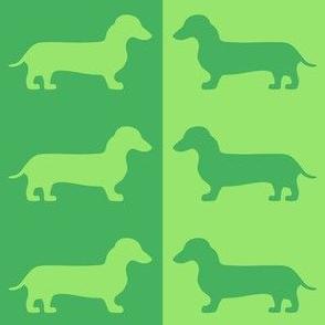 dachshund envy