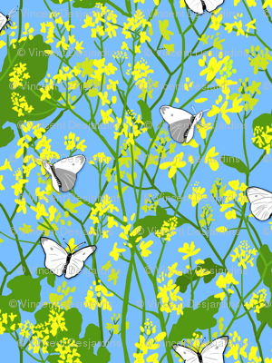 Mustard and Cabbage Moths
