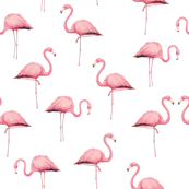 Flamingo Flock on White