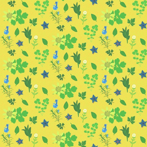 herbs on yellow background