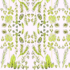 herbs soft pink background