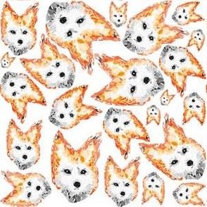 white foxes