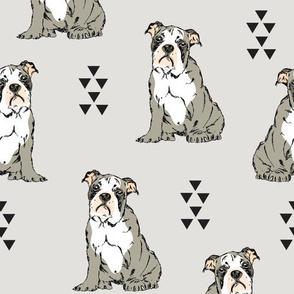 English Bulldog Grey