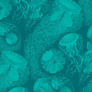 Jellyfish Swarm ~ Penzance