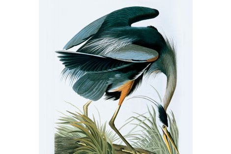 R04-great-blue-heron_shop_preview