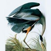 R04-great-blue-heron_shop_thumb
