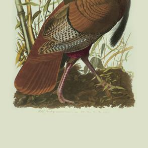 07-wild-turkey