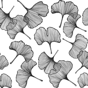 Ginkgo in Black & White