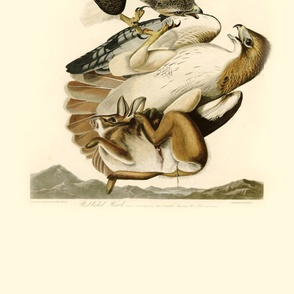 08-red-tailed-hawk
