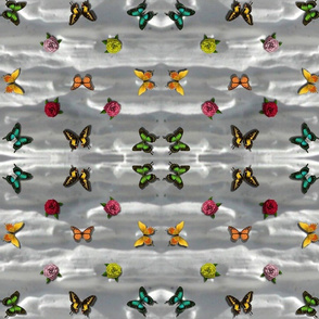 butterfly_on_grey