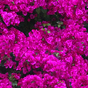 Flowers Out of Bed ~ Mystic Magenta