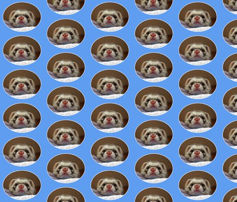 Rrferret_oval_on_blue_shop_preview