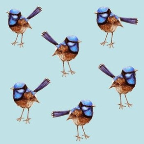 Blue Wrens Russet on Soft Blue