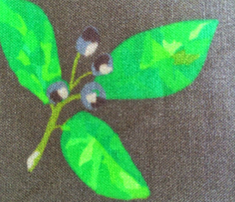 Rrrherb-garden-jpeg-file-9_comment_485856_thumb