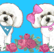Bichons and roses