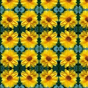 Yellow Coreopsis 9166
