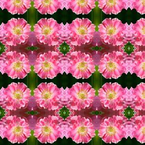 Pink Poppy 8080